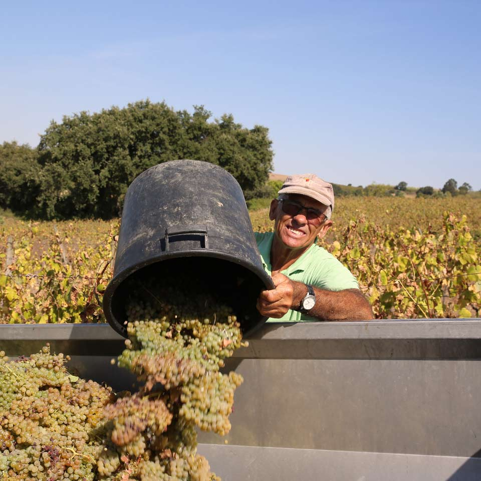 wines-folgorosa-harvest-men