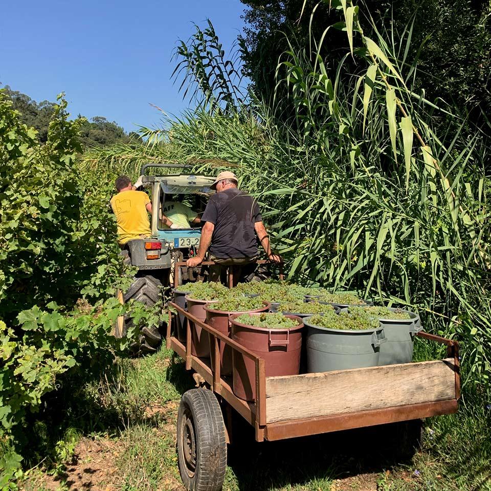 wines-harvest
