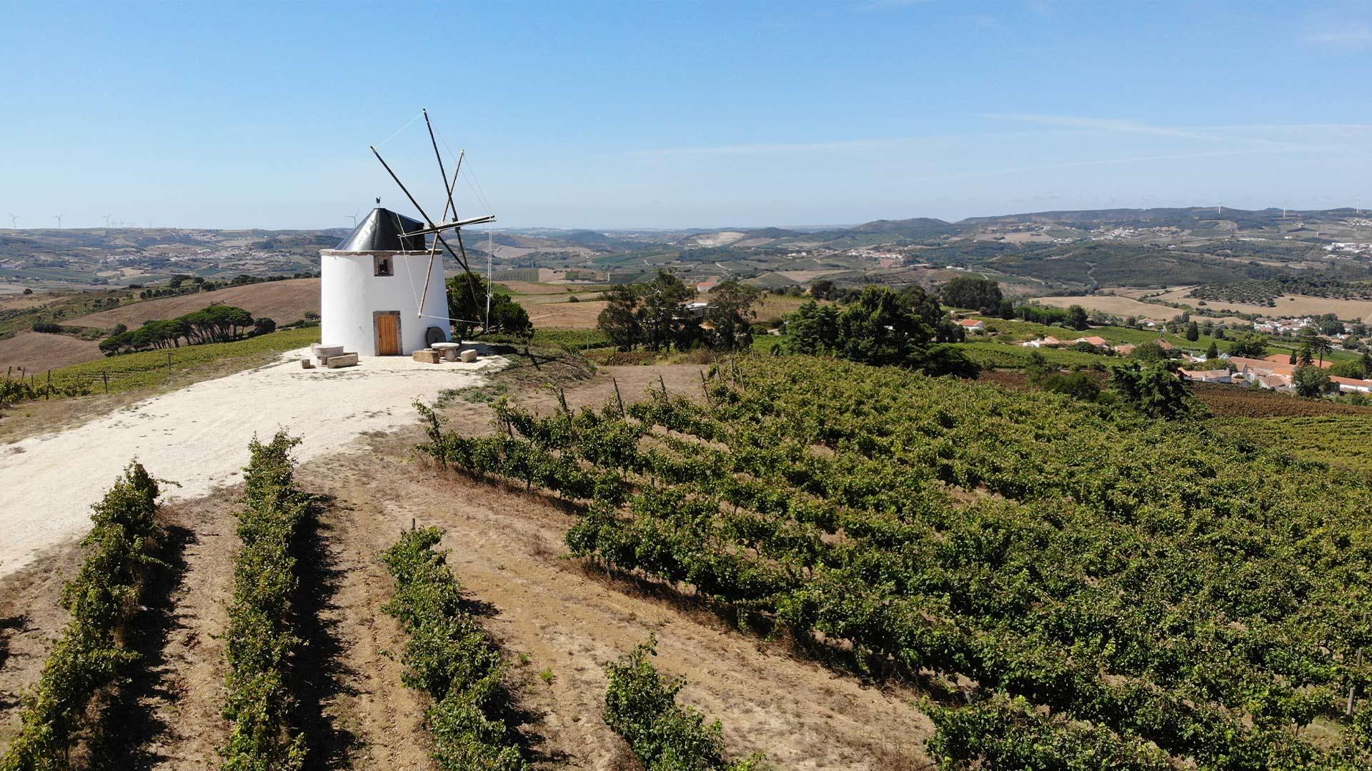 wines-quintas